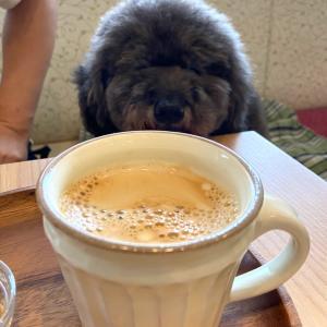 うみべのカフェへGO