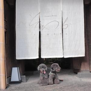秋の犬旅!2日目祇園八坂さんぽ