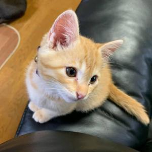 【衝撃!飼い猫疑惑の謎が解明しました!】