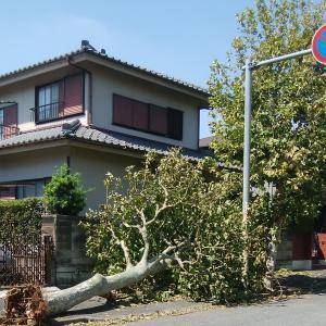 台風15号の影響で、5日間停電しましたが、現在は、復旧して電話で予約が出来るようになりました。