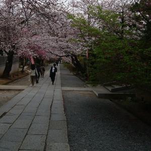 今年の桜は、3週間も楽しめました。