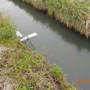 マブナ釣りin手賀沼