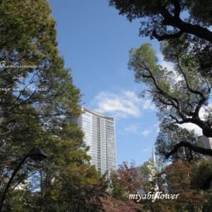 葉っぱは赤くなったかな?:日比谷公園