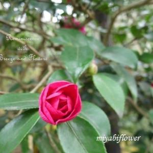 やがて花開くまで・・・