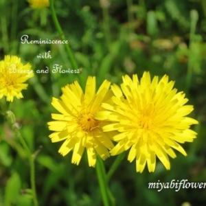 かわいいのにこんな名前で・・・そして懐かしい野の花たち