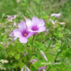 小さな花が微笑むとき・・・