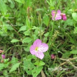 畦道での再会 懐かしい草花