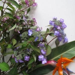 JAの山紫陽花を生けて・・・