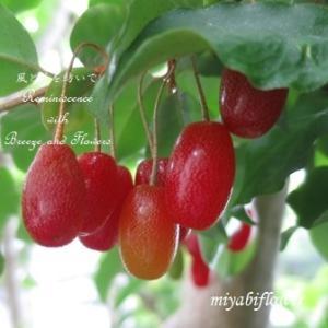 庭の赤い茱萸を生けて・・・
