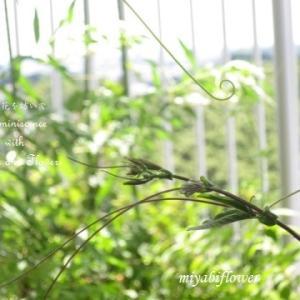 夏色のクレヨン 緑 青 黄 ~ JAの花を生けて