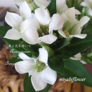 切り絵のような花びら 白いりんどう