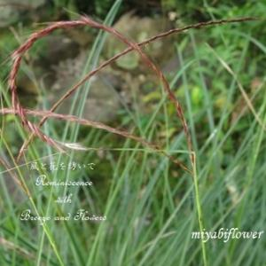 くるりん ススキと小さな花や実