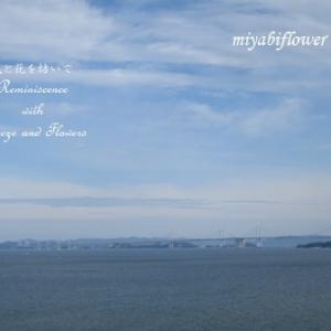 いつかの海 いつかの空