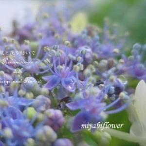 紫陽花ミステリー 続きはどうなるでしょう