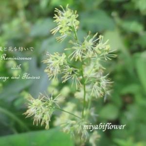 夏を見送る里山の小さな花