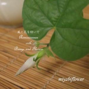 思いがけない花が咲いて・・・