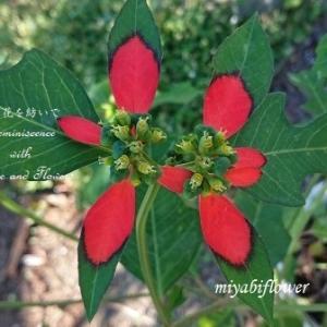 葉っぱに赤い落書き? そしてきょうはナミアゲハの誕生日(?)