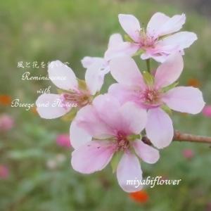 秋の桜 秋の色