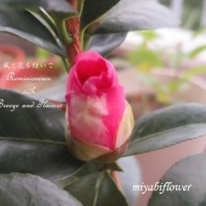 椿の一粒の実が、小さな花になるとき・・・