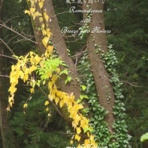 秋の色を探して・・・