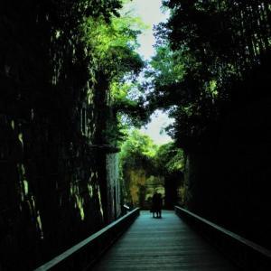 心を取り戻すため森林浴。。。