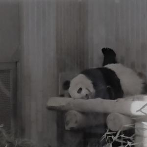 動物園でテンションが上がる...(笑)