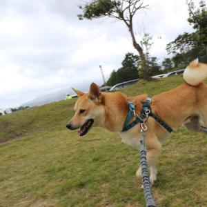 鳥取の大山でキャンプ-1