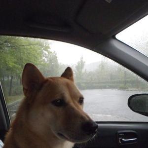 大雨の散歩