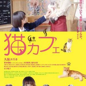 「猫カフェ」、猫カフェで癒される人たち!