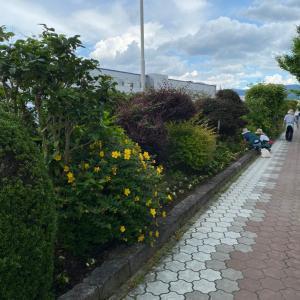 メインストリートの花の植え替え