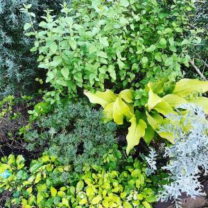 風の輪ガーデンとエサシ草の種まき