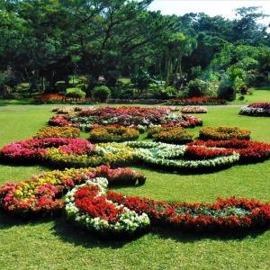 デイゴの幼花がほんの少し咲いていたー「宮古島市熱帯植物園」 チョコをいただく