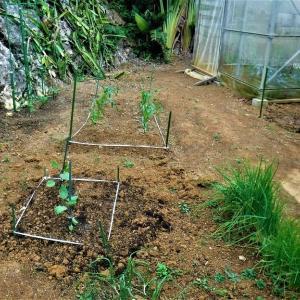 この頃の菜園生活ー春野菜の準備終了
