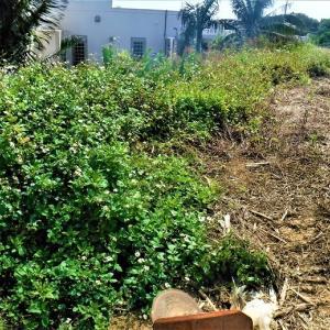 平安名埼灯台も新型コロナのため業務中止ー東平安名崎  大量の雑草を刈り取る ハンダマ料理