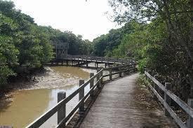 川満地区を気持ちよく歩いたがーマングローブの遊歩道橋の再築など課題は多いか、昨日の散歩