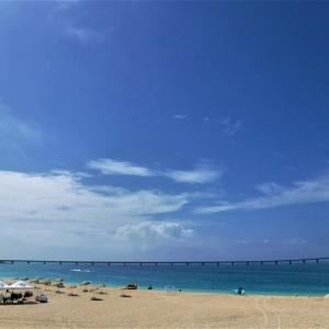連休明けの前浜ビーチに立ち寄る  宮古のこの頃のコロナ事情  イソヒヨドリ迷い込む