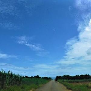 宮古・城辺周辺は好天気ー沖縄本島は大雨被害が甚大 その後のメジロの巣の様子など