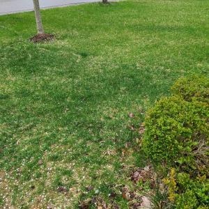 春が来た!芝の手入れは業者に頼むといくら?