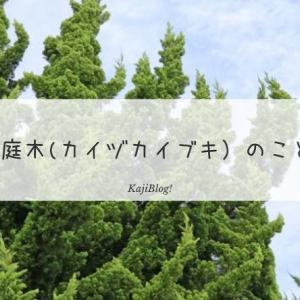 庭木(カイヅカイブキ)のこと