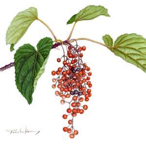 秋は鮮やかな木の実の季節~