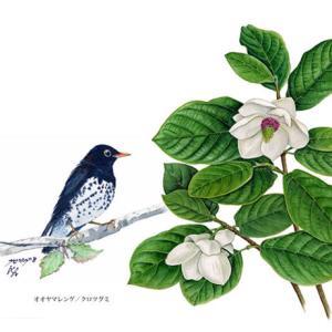 花と野鳥~
