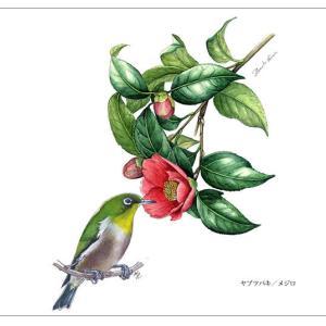 ~花と野鳥~