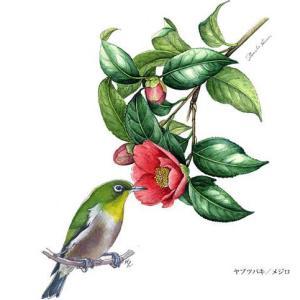 花と野鳥~その2