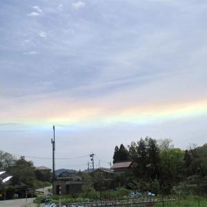 彩雲とウラシマソウ