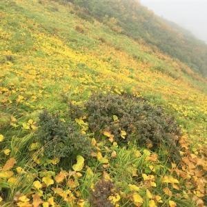南魚沼市 十字峡から中ノ岳と利根川水源を歩く(後編)     Mount Nakano in Minamiuonuma, Niigata