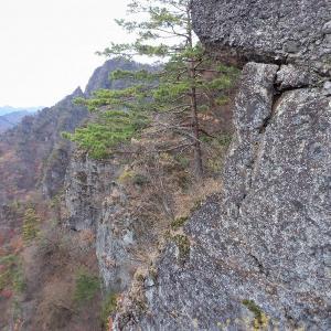 安中市 妙義山 晩秋の御岳東稜とモミジに映える篭沢     Rock Climbing at Ontake in Mount Myōgi, Annaka, Gunma