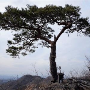 常陸太田市 鍋足山で岩稜歩きと春の花模様     Mount Nabeashi in Hitachiōta, Ibaraki