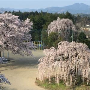 """宇都宮市 古賀志の孝子桜     Cherry blossoms """"Kōshi"""" in Utsunomiya, Tochigi"""