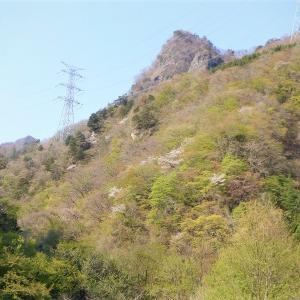 西上州(下仁田町) 荒船湖からトヤ山とアカヤシオ咲く物語山へ     Mount Toya in Shimonita, Gunma