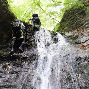 上野村 諏訪山のシオジ原生林に潜む大神楽沢で沢登り     Stream Climbing in Okagurasawa, Ueno, Gunma